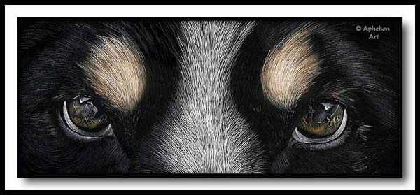Moment Of Reflection - Scratchboard Border Collie