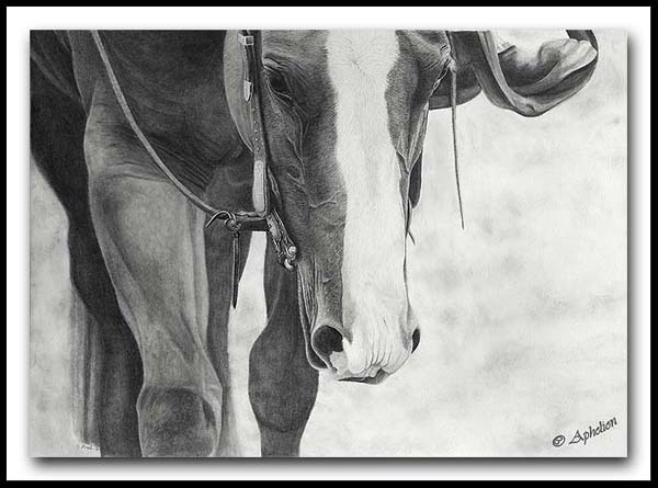A Kind Eye; graphite drawing by Cathy Sheeter;  quarter horse