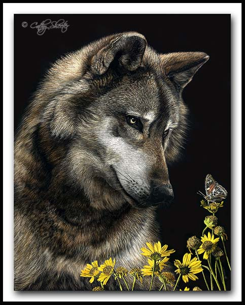 The Naturalist- Gray wolf Scratchboard