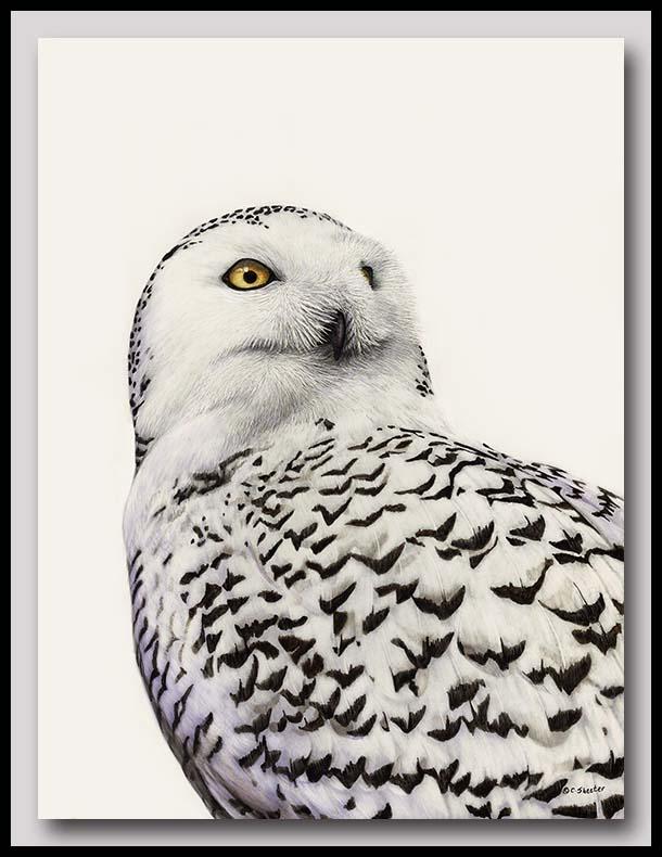 Snowy Owl - Scratchboard Art
