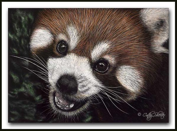 All Smiles - Red Panda Scratchboard and Ink