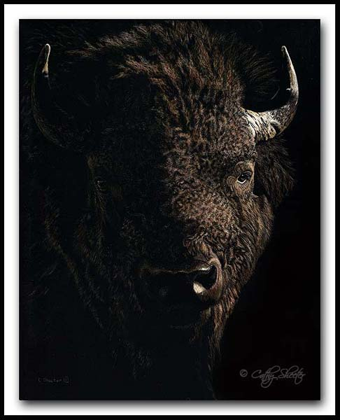 American Icon - Scratchboard Bison