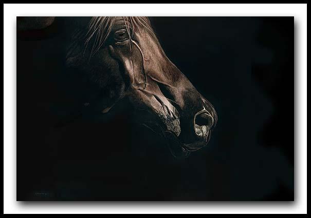 Arabian Night - Scratchboard and Ink Arabian Horse