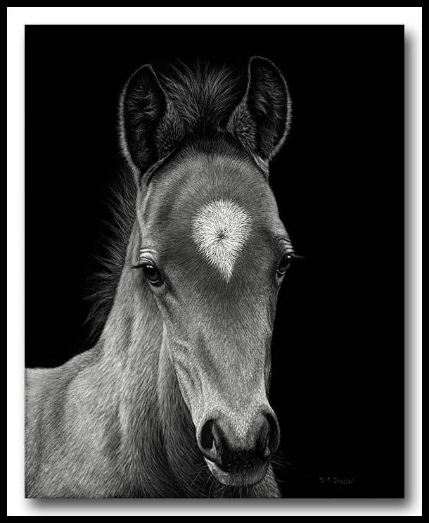 Horse foal - Scratchboard/></a><br />  <p>&nbsp;</p> </td>     <td width=