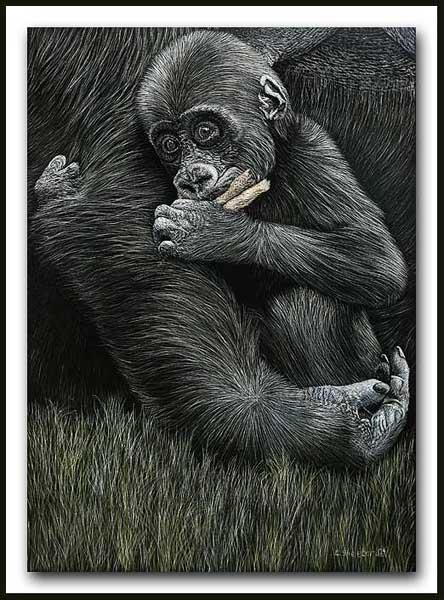 Mother's Comfort - Gorilla Scratchboard