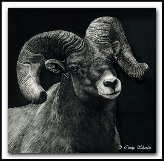Bighorn Sheep Ram Portrait - Scratchboard