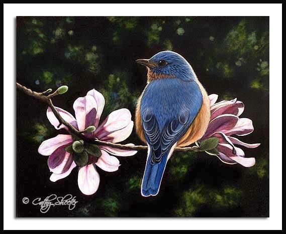 Bluebird and Blossoms- Scratchboard Bluebird