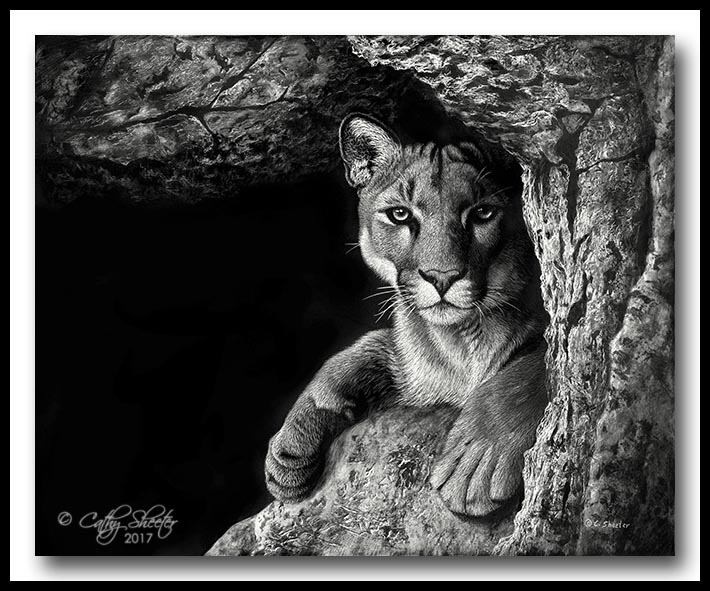 """Canyon Cat"" - scratchboard"