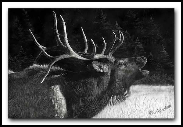 The Challenger - Elk Scratchboard