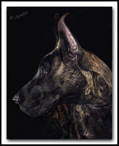 Charisma - Great Dane Scratchboard