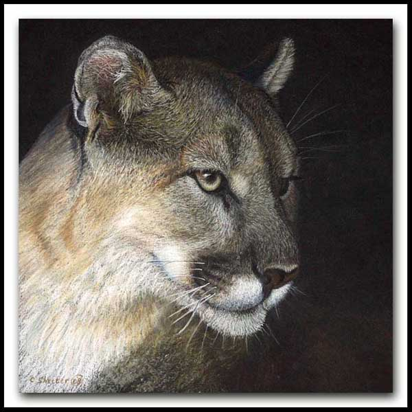 Watchful - Pastel Cougar