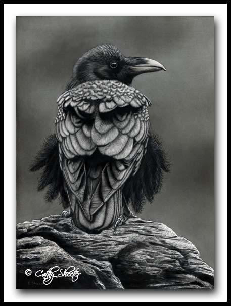 Crow - Scratchboard Art