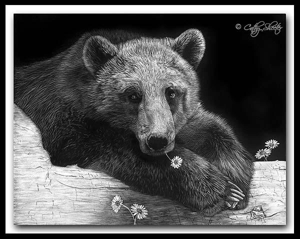 Pickin' Daisies - Scratchboard Brown Bear