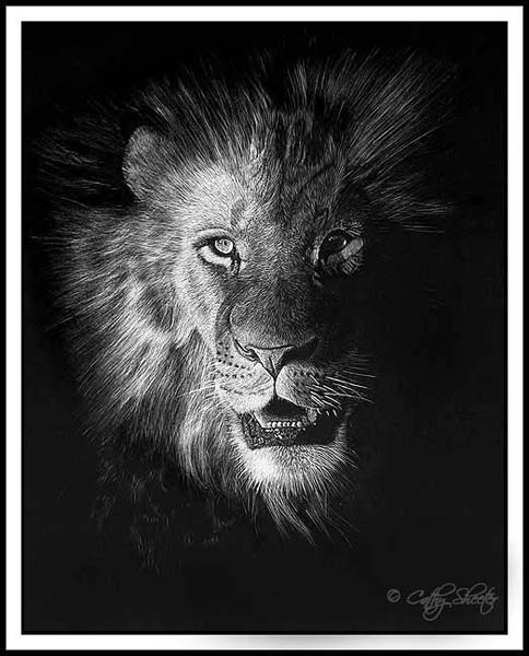 Out Of The Dark Lion Scratchboard