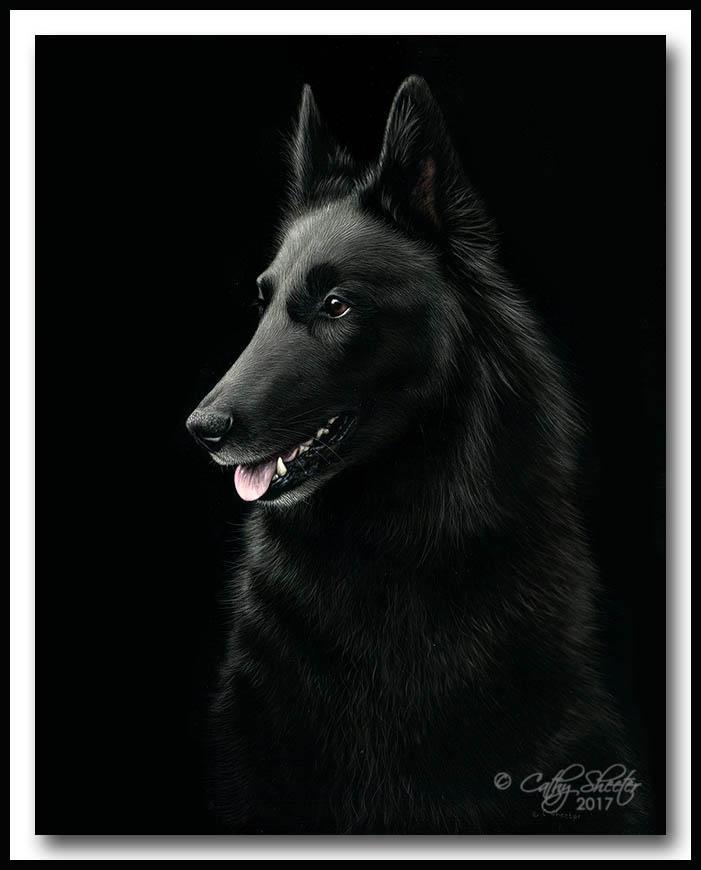 Devon - Scratchboard Belgian Sheepdog
