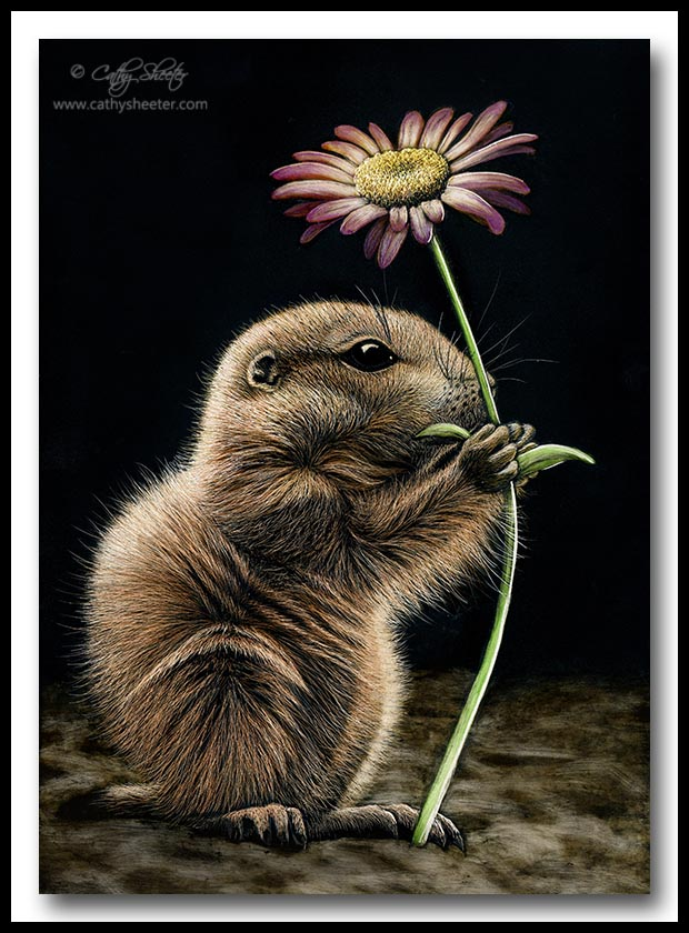 Prairie Dog - Scratchboard