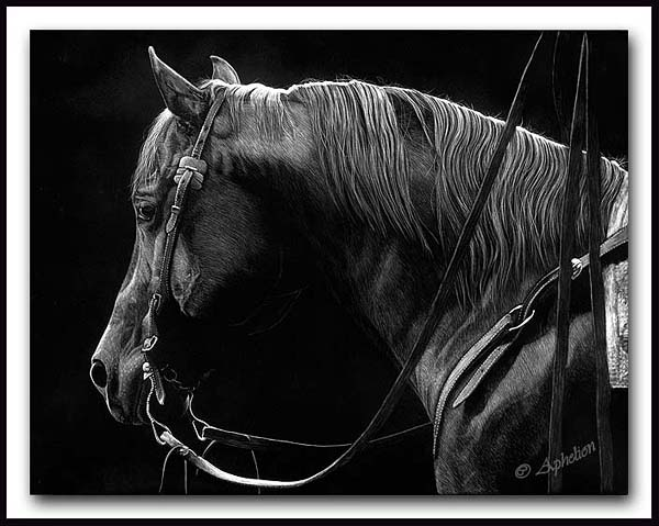 Distant Gaze - Scratchboard Horse