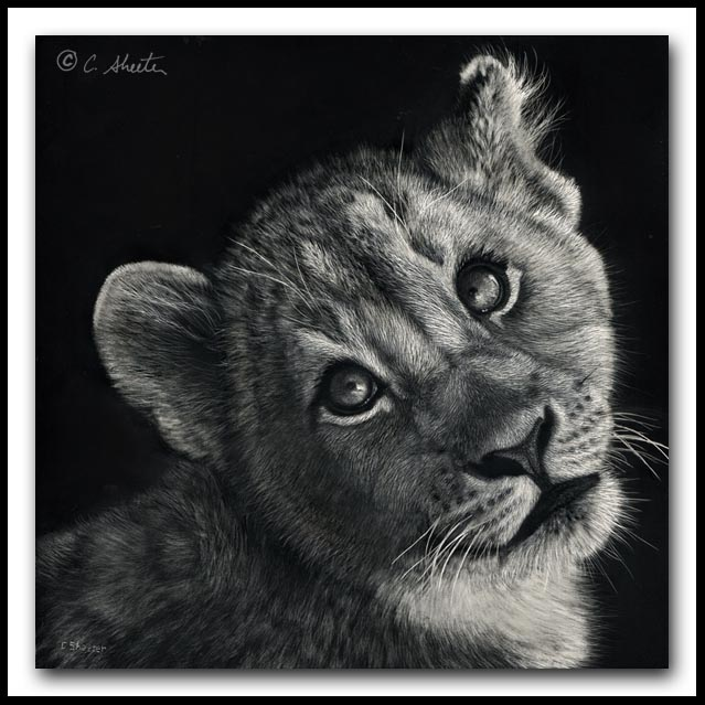 Dreaming Big- African Lion Cub Scratchboard and Ink