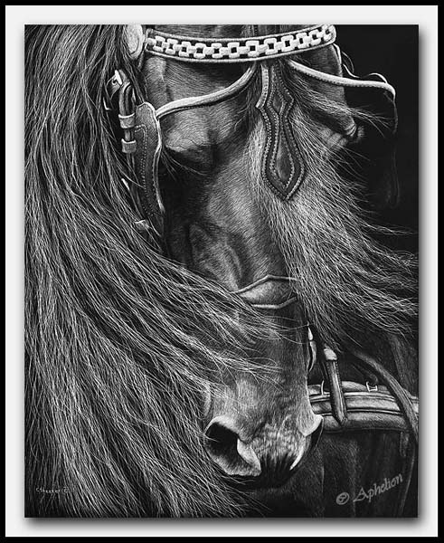 A Driving Force; scratchboard art by Cathy Sheeter;  friesian horse