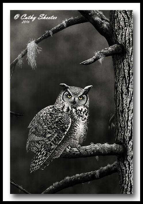 Dusk To Dawn - Scratchboard Owl