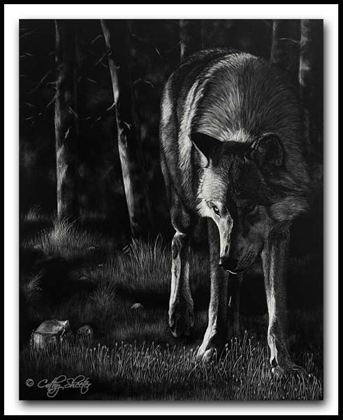 Edge Of Darkness - Scratchboard wolf