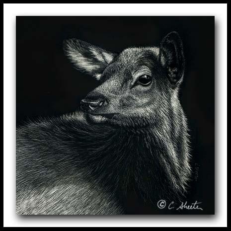 Elk Calf - Scratchboard Art
