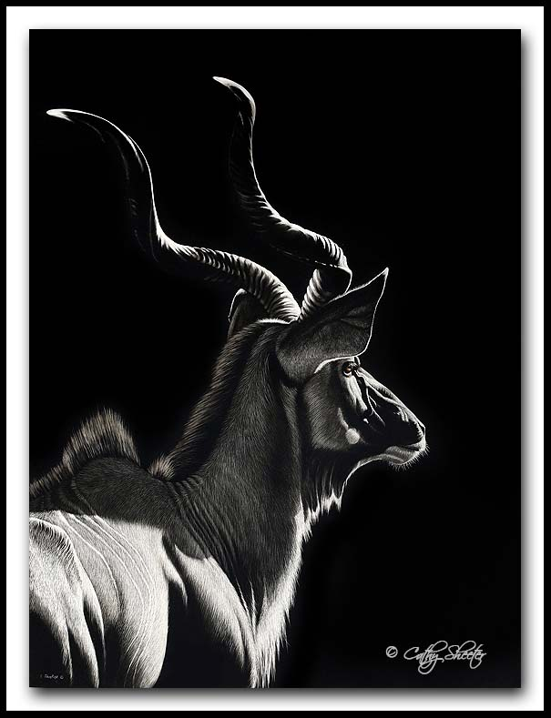"""Ever Alert"" - Greater Kudu Scratchboard"