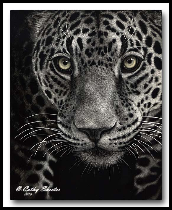 Eye Spy- Jaguar Scratchboard