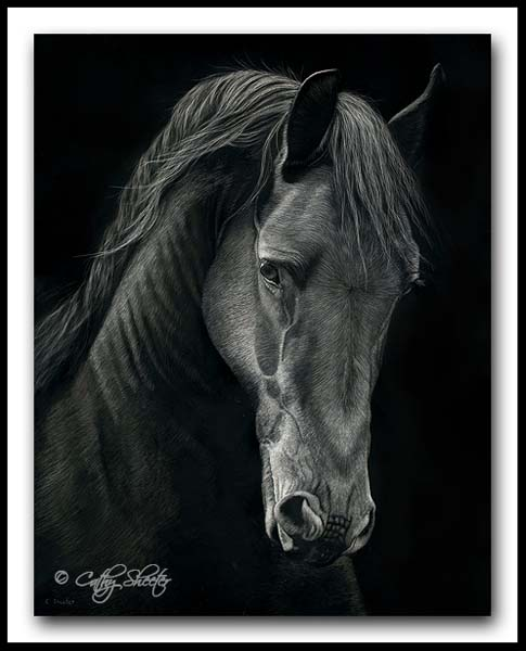 Friesian Horse - Scratchboard Art