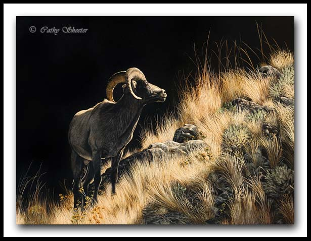 Feeling Inclined - Bighorn Sheep Scratchboard Art