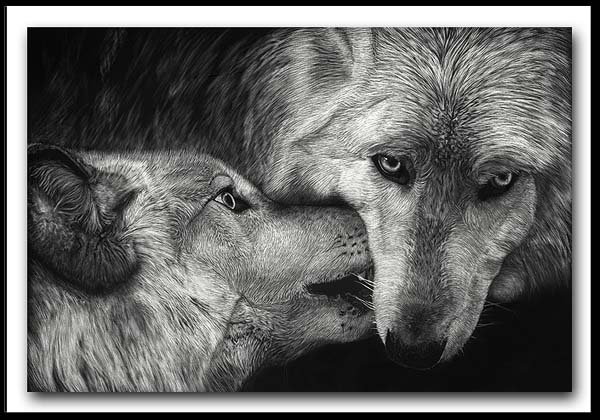 The Greeting - Arctic Wolves Scratchboard