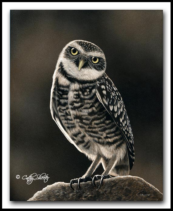 Ground Patrol - Scratchboard and Ink Burrowing Owl