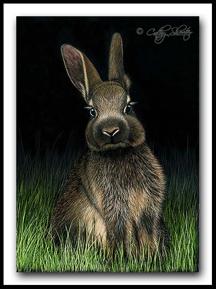 Honey Bunny- Scratchboard