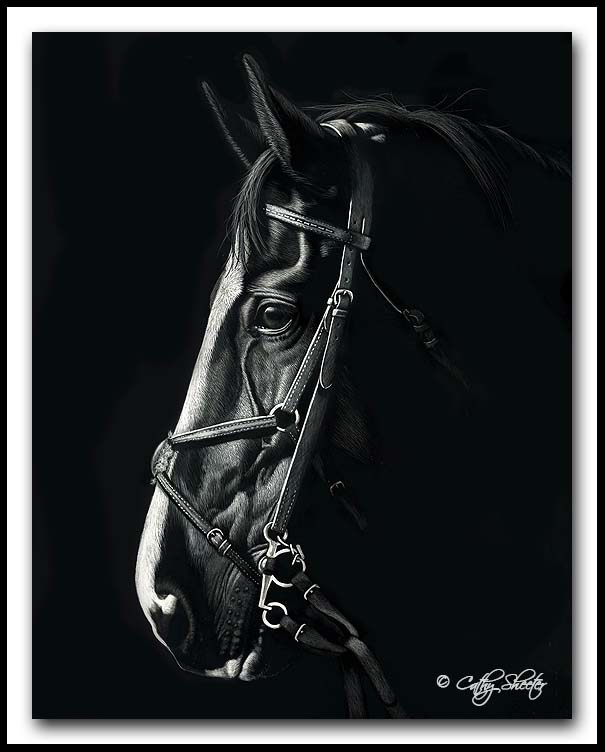 Hunter - scratchboard horse