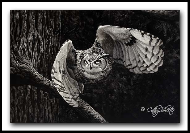 The Huntsman- Great Horned Owl Scratchboard
