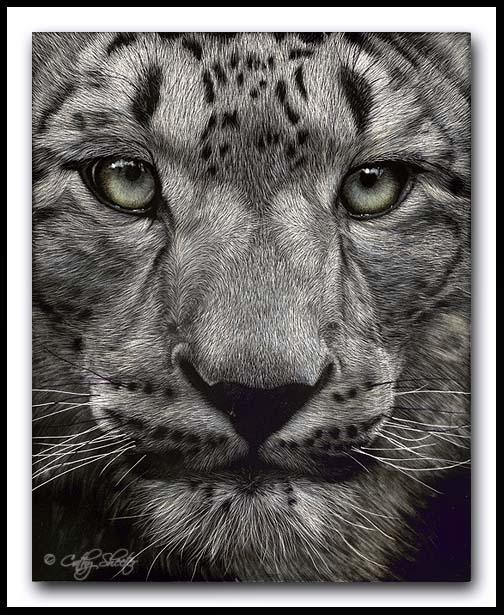 The Hypnotist - Scratchboard Snow Leopard
