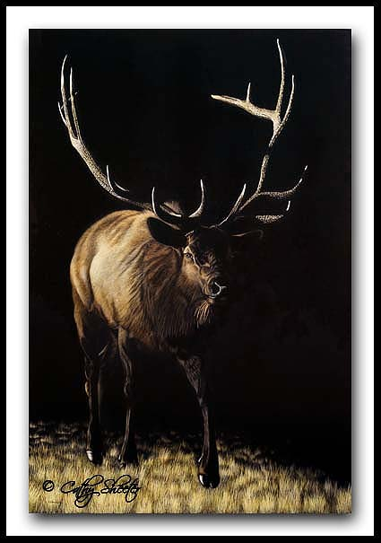 Imperial - Bull Elk Scratchboard and Ink