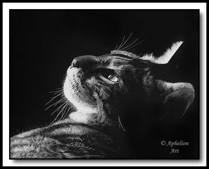 In The Light; scratchboard art by Cathy Sheeter; Egyptian Mau Cat