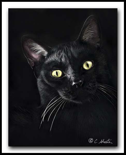 Jor-Jor - black cat