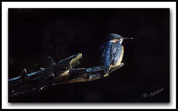 A King On His Throne - Common Kingfisher Scratchboard