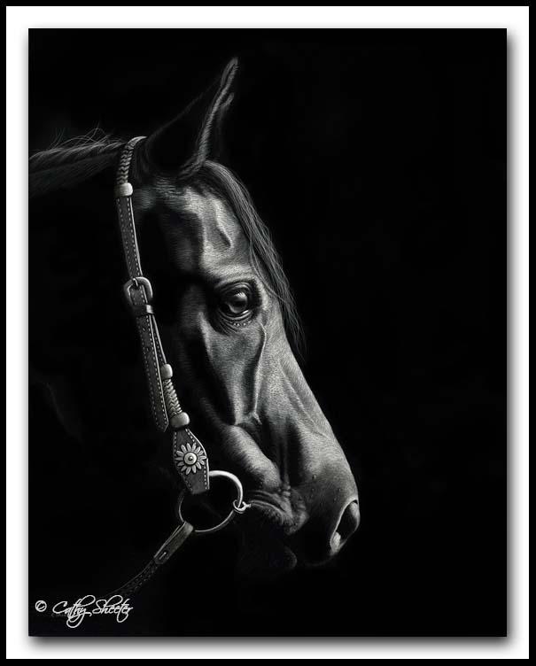 Leo - scratchboard horse