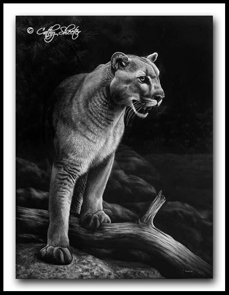 Lion In Wait - Scratchboard Art