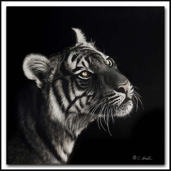 Luminescent - Scratchboard Bengal Tiger
