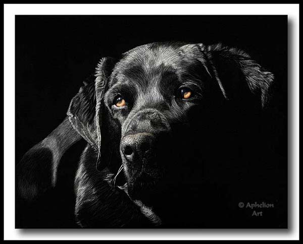 Soulful - Scratchboard Labrador Retriever