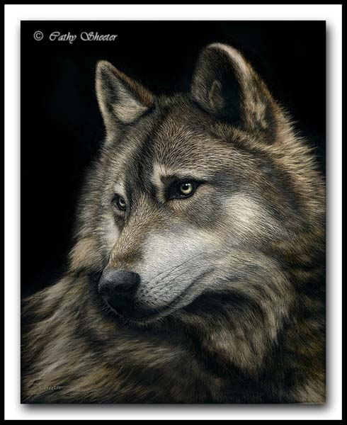 Mahigan - Gray Wolf Scratchboard Art