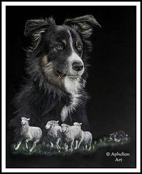 Lesson's Learned - Scratchboard Border Collie