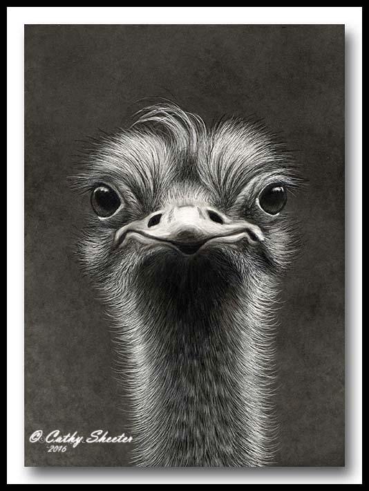 Monday Morning - Scratchboard Ostrich