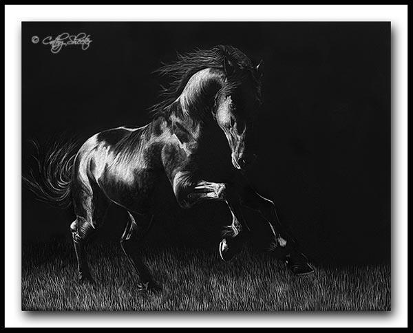 Moonlight Dance - Scratchboard Horse