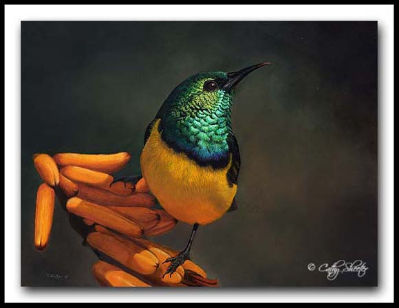 Napoleon - oil painting - collared sunbird