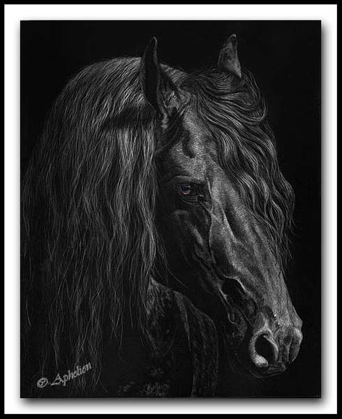 Nobility - Scratchboard Friesian Horse